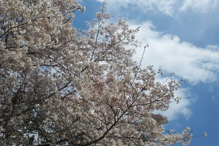 吉野で春の上方舞お稽古体験いたします!