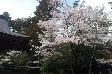 春の上方舞お稽古体験 ー大阪難波教室ー