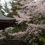 大和神社奉納舞お天気に恵まれました!